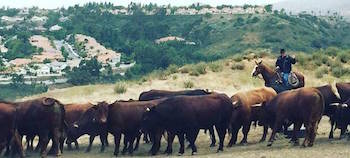Frank Fitzpatrick, owner of Silverdo, CA-based 5 Bar Beef overseeing his herd of pasture-raised, grass-fed cattle. Photo courtesy of 5 Bar Beef.