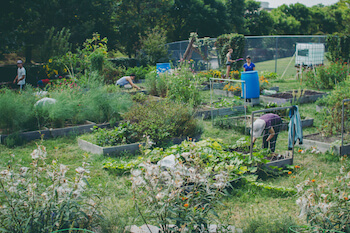 Neighbors at work at Blue Jay's Perch Community Garden in Baltimore, MD. Photo Credit: Florence Ma.