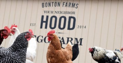 bonton-farms-urban-farm-dallas-texas