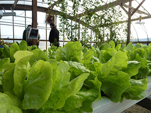 Amidst Mass of Iowan Corn Growers, Aquaponic Farm Offers Diverse Organic Product Mix