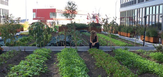 Empress Green Zaro Bates Urban Farm Staten Island Residential Development
