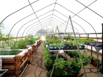 Tidy beds and rows of pots contain what will be the produce delivered to families in Racine, Wisconsin's 'Growing Home' CSA. Photo courtesy of HALO, Inc.