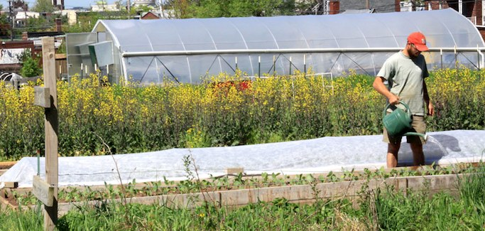 Urban Farm in Harrisburg, PA Sees Limitless Demand for its Produce