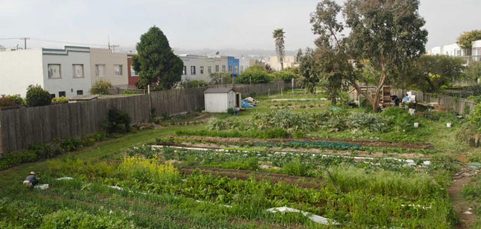 Despite Land Tenure Challenges, San Francisco Urban Farm Sets Sights on Economic Viability