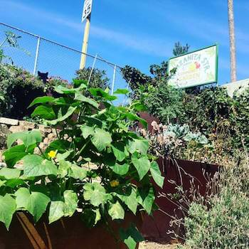 The Manzanita Street Community Garden in Los Angeles, CA. Photo courtesy of the Los Angeles Community Garden Council.