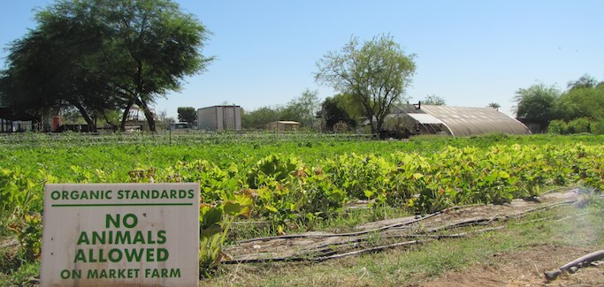 On Edge of Phoenix, Small-scale Farmer Seeks to Grow Local Food Movement