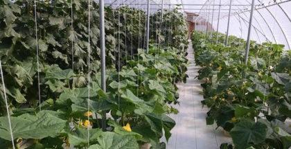 quickley-produce-farm-hydroponics-missouri