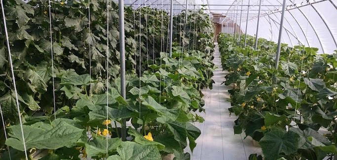 A Hydroponic Twist on the Family Farm