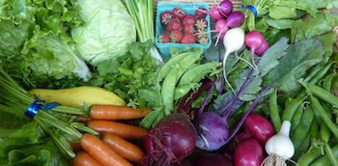 Organic CSA in Rochester, WA Finds Success in Sticking with What People Know