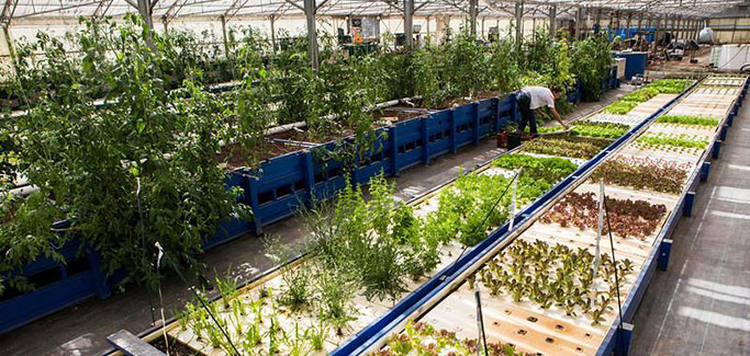 Finding Your Roots in Water: Aquaponics Association Conference Set for September in San Jose