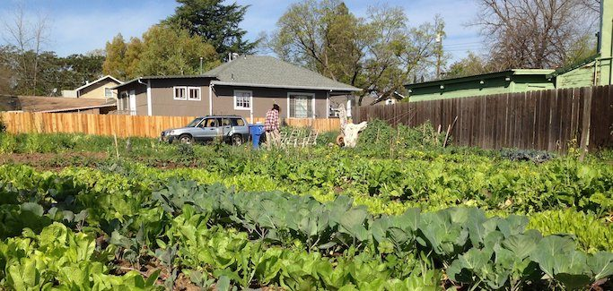 UC Cooperative Extension Offers Urban Farming Workshops in San Diego and Sacramento