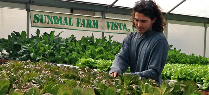 Water Regulations Prompt SoCal Orchid Farm's Foray into Hydroponic Vegetable Growing