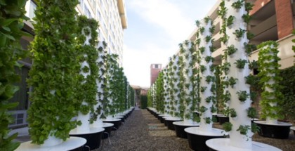 A new teaching garden at the University of Southern California uses aeroponics to grows its fruits, vegetables and herbs.  Photo courtesy Erika Chesley/USC Auxiliary Services