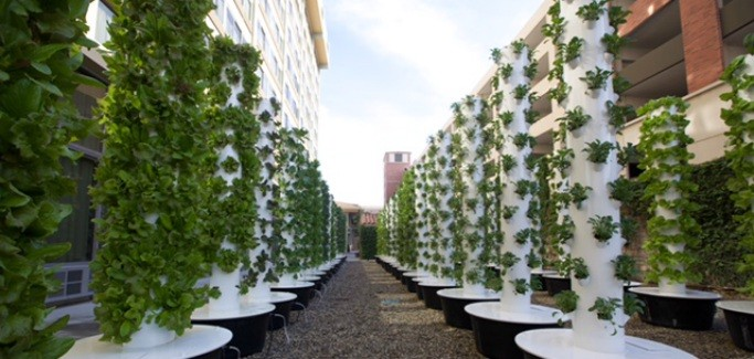 SoCal Universitys Aeroponic Garden Challenges Food System Status Quo