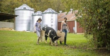 Students working with Warren Wilson College Farm take one of the school's pigs out for a stroll. Photo courtesy of Warren Wilson College.
