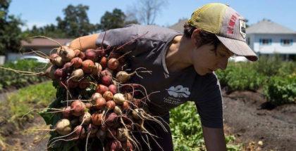 west-sacramento-urban-farming-program