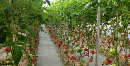 amelias farm hydroponic feature image hydroponic farm