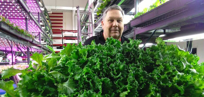 To Grow Community and Jobs of the Future, Suburbanite Launches Vertical Farming Enterprise in Detroit