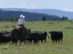 Wyoming Family Realizes Dream in Profitable Organic Grass Fed Beef Ranch