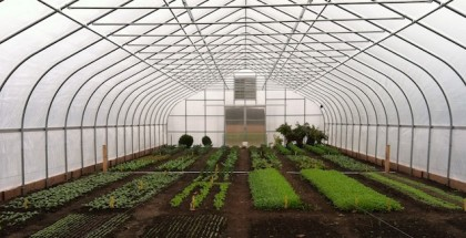 cold frame farm featured image