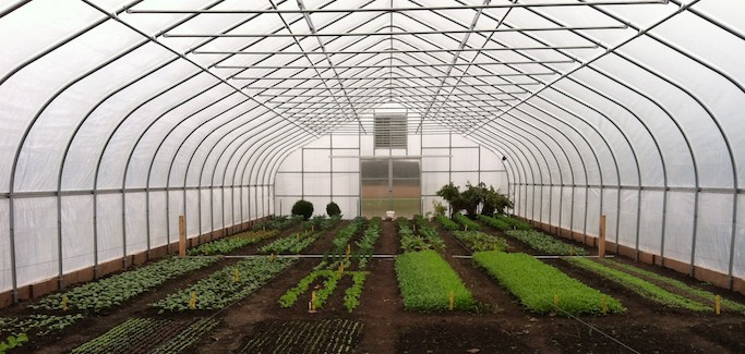 Former Landscape Architect Takes on Challenge of Launching Organic Farm in Romeo, MI