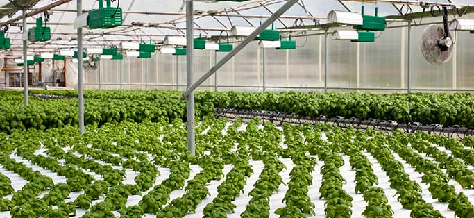 Former Electrical Engineer Strikes Out on His Own, Turns Profit with Sustainable Hydroponic Farming
