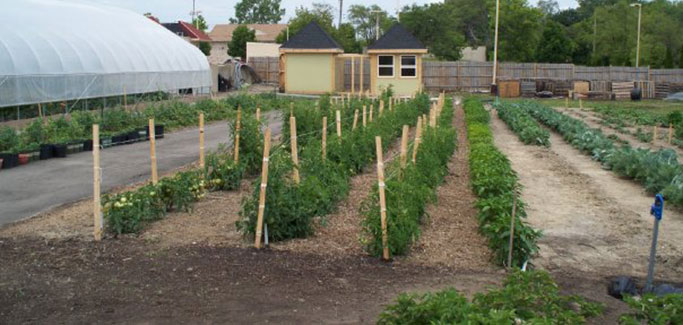 From Cars to Crops: City of Flint, MI Looks to Urban Agriculture for Economic Revitalization