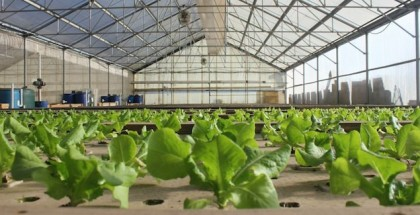 feature image viridis aquaponics