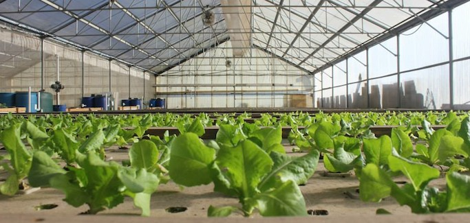 Days Away from First Harvest, Sustainability is Lynchpin to Bay Area Aquaponic Startup