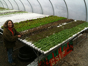 New Jersey Hydroponic Farm Transforms Vacant Lots into Microgreens for Local Chefs