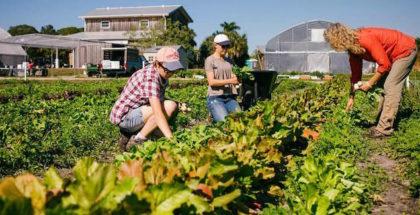 geraldson-community-farm-florida-christa-leonard