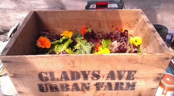 Photo credit: Gladys Avenue Urban Farm