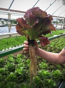 Photo Credit: Green Acre Aquaponics