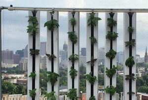 Urban Pastoral's rooftop hydroponic growing towers stand in front of the Baltimore skyline. Photograph courtesy of Urban Pastoral.