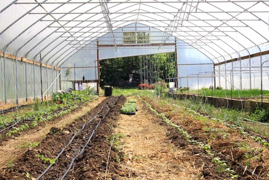 The 30x72 high tunnel at Joshua Farm, an urban farm based in Harrisburg, PA. Photo Credit: Missy Smith