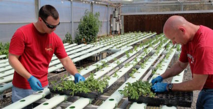 hydroponic-basil-archis-institute-san-diego-colin-and-karen-archipley