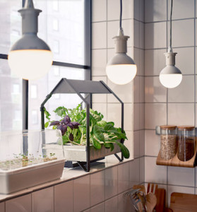 IKEA is introducing hydroponic indoor gardening kits for the urban dweller.
