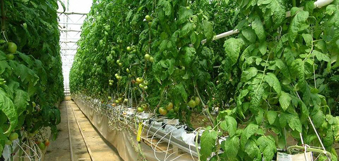 Experts: Hydroponic Growing Offers Advantages, But Won't Replace Soil