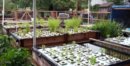last-organic-outpost-houston-aquaponics-system-urban-farm-joe-icet