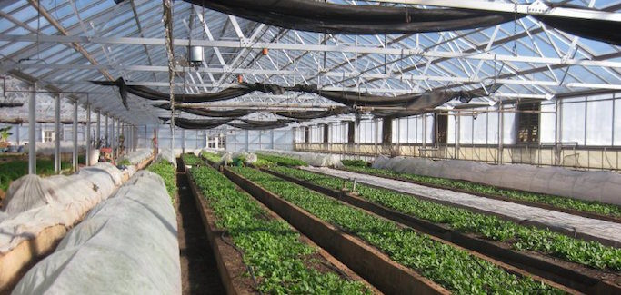 Urban Farming Org Transforms 9 Empty Greenhouses to Tackle Food Insecurity and Grow Meaningful Jobs