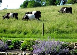 mainstone-farm