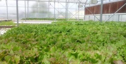 merchants-garden-aquaponics-farm-urban-agriculture-arizona