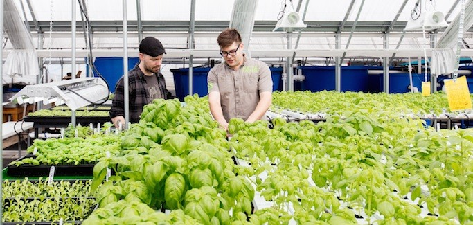 Employing Marketing and Urban Farming Acumen, Upstart Aquaponics Farm Finds Footing in Windy City
