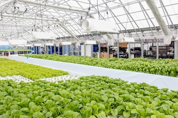 An aquaponics greenhouse is the centerpiece of Metropolitan Farms in Chicago, Illinois. (photo credit: Jeff Schear)