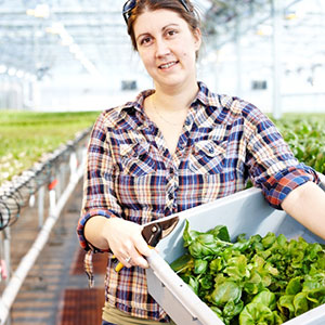 Gotham Greens worker harvests greens from the company's Brooklyn greenhouse. Photo Credit: Gotham Greens/Mark Weinberg
