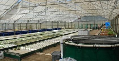 ouroboros farms feature683