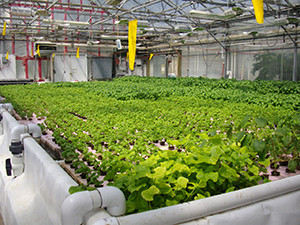 Maize High School in suburban Wichita, Kansas features an extensive hydroponics program. (photo courtesy of Jay Super/Maize High School)