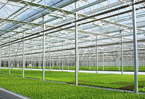The Green City Growers Cooperative operates a 3.25-acre greenhouse in the heart of Cleveland, Ohio. The greenhouse grows basil and several types of lettuce. (Photo provided by Daniel Ball of the Cleveland mayor's office).