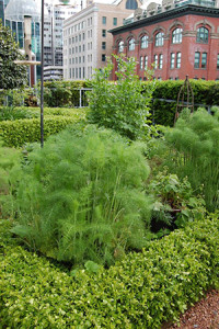 Photo courtesy of Green Roofs for Healthy Cities