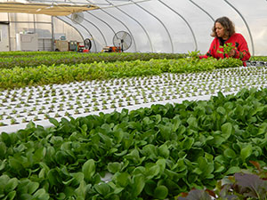 Lorraine Gibbons tends to her plants in the Garden State Farms greenhouse. Photo courtesy of Tony Gibbons